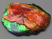 ammoliet amolite