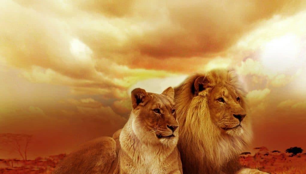 Edelstenen sterrenbeeld leeuw